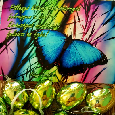 Pillangó kiterjeszti szárnyát. Nagy Szaffina képeslapjai és könyvei megvásárolhatóak a nagyszaffinaeletmuvei.hu weboldalon.