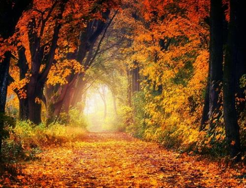 Mabon, őszi napéjegyenlőség